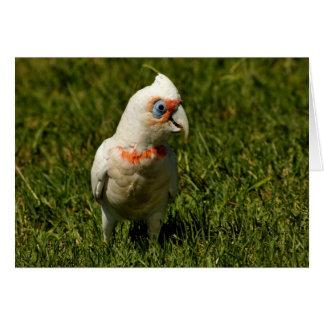 Cartão Penas de pássaro do bico de Corella que voam o