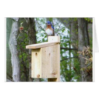 Cartão Penas Ruffled Bluebird