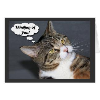 Cartão Pensamento de você com foto de um gato bonito