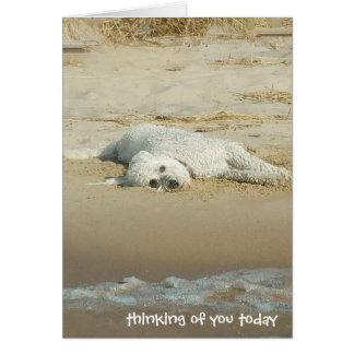 Cartão pensamento de você-goldendoodle que coloca na