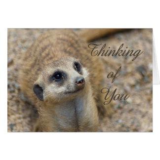 Cartão Pensamento de você Meerkat