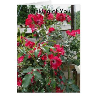 Cartão Pensando de você, da alegria & das bênçãos, rosas