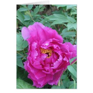 Cartão Peônia cor-de-rosa de abertura