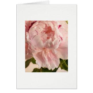 Cartão Peônia cor-de-rosa (Paeonia)