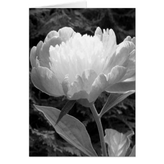 Cartão Peônia em preto e branco
