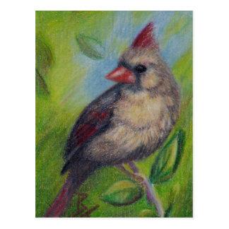 Cartão pequeno do aceo da senhorita Cardinal
