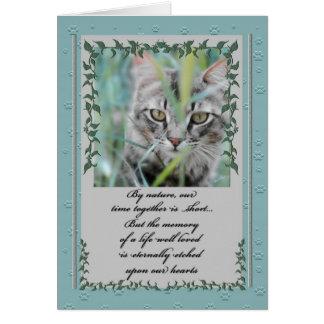 Cartão Perda da simpatia do animal de estimação de gato