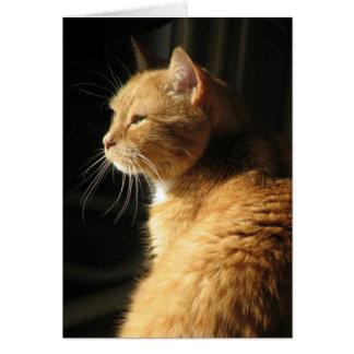 Cartão Perda de animal de estimação…