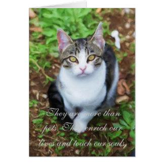 Cartão Perda de gato