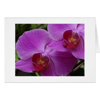 Cartão Perfeição da orquídea