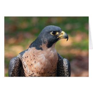 Cartão Perfil do falcão de peregrino