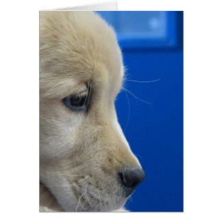 Cartão Perfil do filhote de cachorro da cor