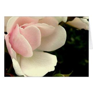 Cartão Pérola Notecard cor-de-rosa (vazio)