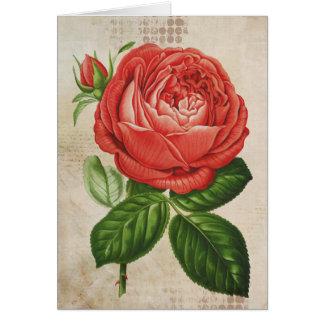 Cartão Perpétuo híbrido vermelho do vintage, Paul Neyron