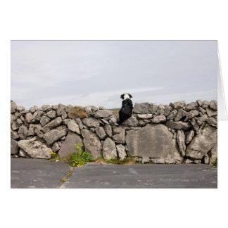 Cartão Persiga o assento em uma parede de pedra irlandesa