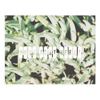 Cartão personalizado com as plantas verdes pálido