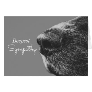 Cartão Pêsames do cão da simpatia | do animal de