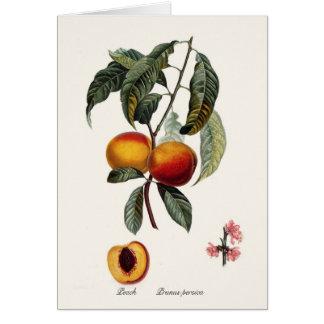 Cartão Pêssego