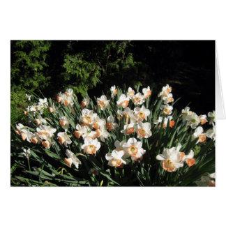 Cartão Pêssego Daffodiles
