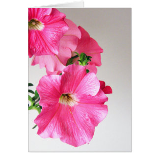 Cartão Petúnias cor-de-rosa de conexão em cascata