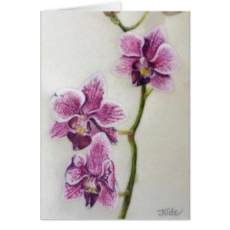 """Cartão Phalaenopsis de """"orquídea traça"""" 5"""" x 7"""", com"""