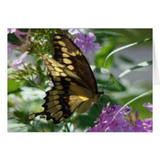 Cartão Phlox de Swallowtail Butterfly&Lavendar