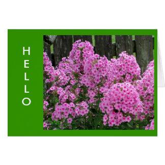 Cartão Phlox e cerca cor-de-rosa