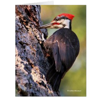 Cartão Pica-pau bonito de Pileated na árvore
