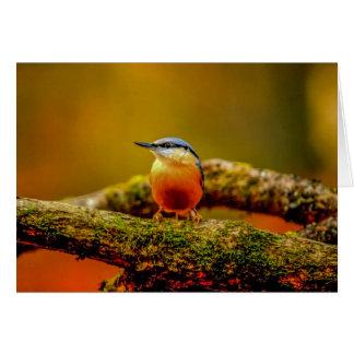Cartão Pica-pau-cinzento