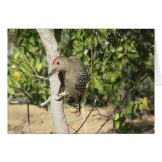 Cartão Pica-pau de Gila