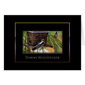 Cartão Pica-pau Downy - coleção do pássaro - preto/ouro