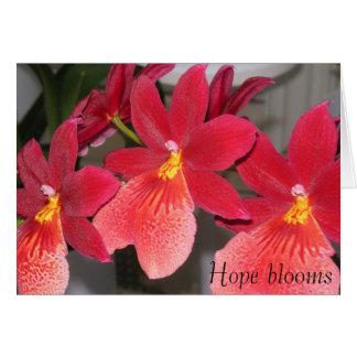 Cartão PICT0391, flores da esperança