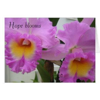 Cartão PICT0393, flores da esperança