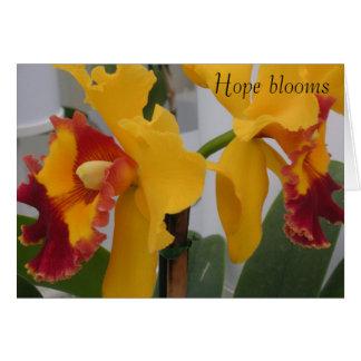 Cartão PICT0396, flores da esperança