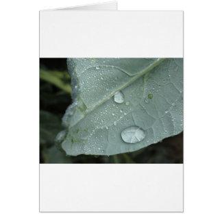 Cartão Pingos de chuva nas folhas da couve-flor