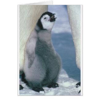 Cartão Pinguim
