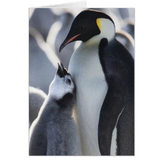 Cartão Pinguins!