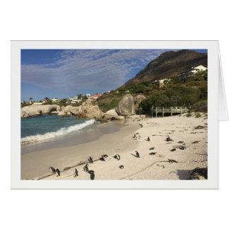 Cartão Pinguins África do Sul