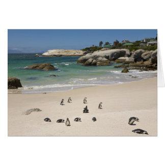 Cartão Pinguins na praia dos pedregulhos, cidade de