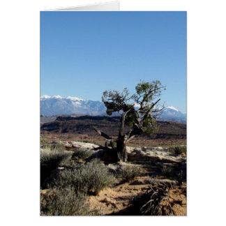Cartão Pinho de Bristlecone solitário