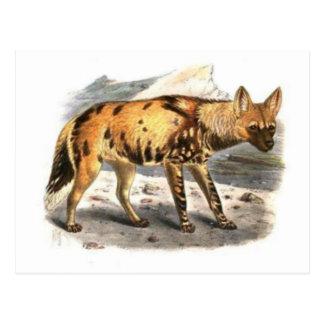 Cartão pintado africano do lobo