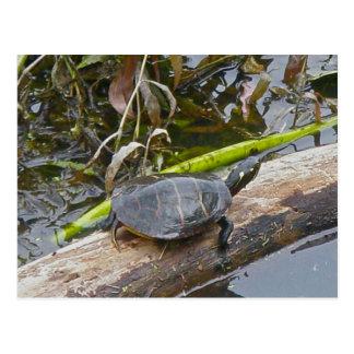 Cartão pintado da tartaruga