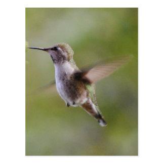 Cartão pintado do pássaro do colibri