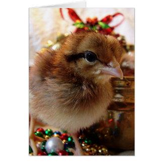 Cartão Pintinho 3 do Natal