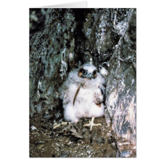 Cartão Pintinho do falcão de peregrino
