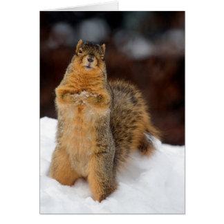 Cartão Pisc o esquilo