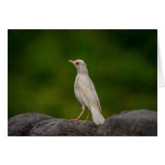 Cartão Pisco de peito vermelho do albino no ponto da