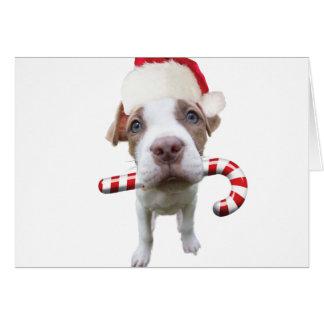 Cartão Pitbull do Natal - pitbull do papai noel - cão de
