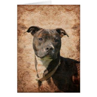Cartão Pitbull Terrier