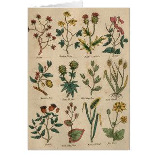 Cartão Placa das plantas